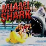 Акула в Маямі